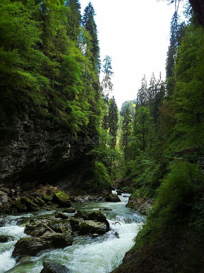Natürlicher Fluss lizenzfreies stockfoto
