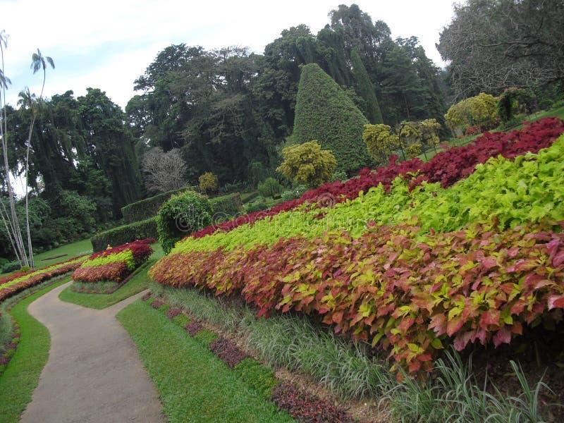 Natürlicher Garten von Sri Lanka lizenzfreie stockbilder