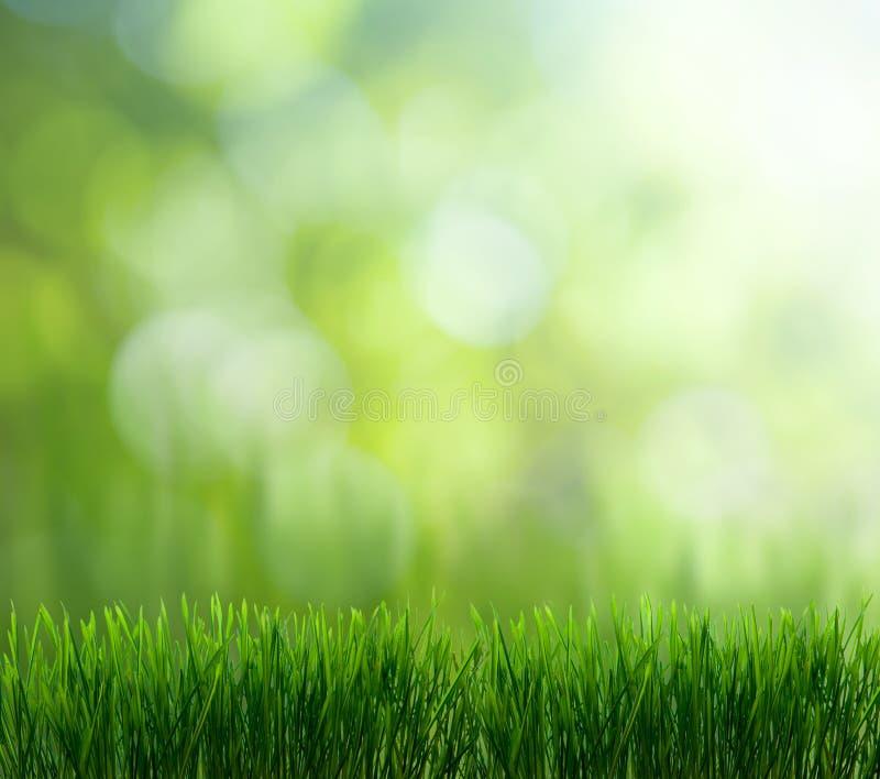 Natürlicher grüner Hintergrund stockfotografie