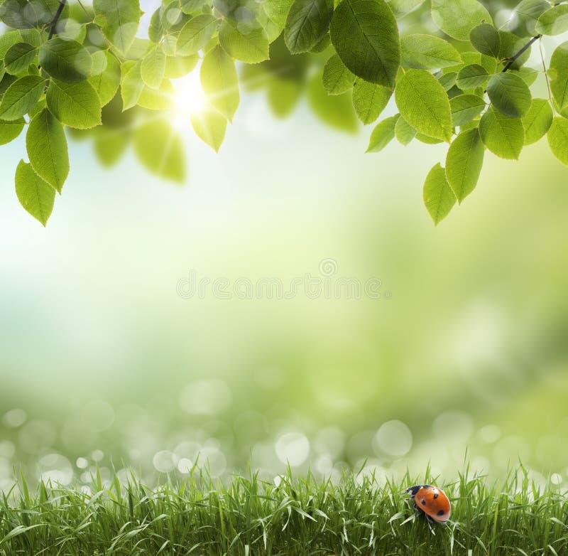 Natürlicher grüner Hintergrund mit selektivem Fokus. Marienkäfer lizenzfreies stockfoto