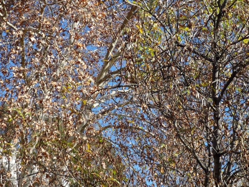 Natürlicher grüner Wald stockfoto