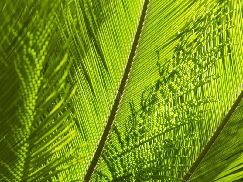 Natürlicher Grünhintergrund mit Beschaffenheit von Palmen- oder Farnwedeln lizenzfreies stockfoto