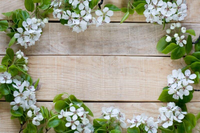 Natürlicher hölzerner Hintergrund mit Obstbaum der weißen Blumen stockbilder