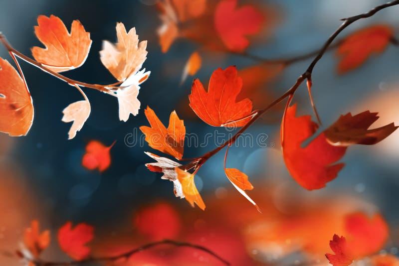Natürlicher Hintergrund des hellen Herbstsommers Rote und orange Blätter im Herbstwaldmagischen Natur og Herbst stockbild