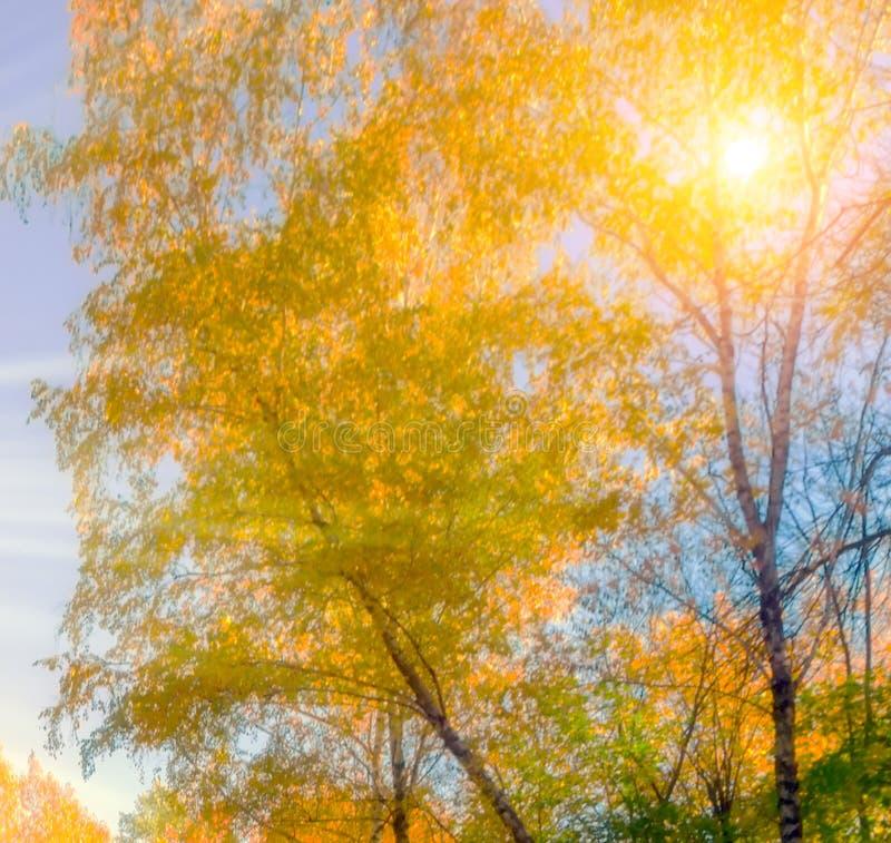 Natürlicher Hintergrund des Herbstes stockfoto