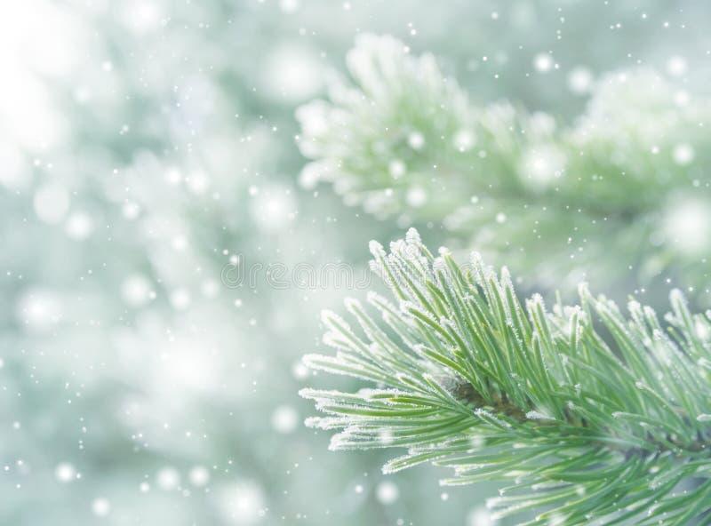 Natürlicher Hintergrund des Winters stockfoto