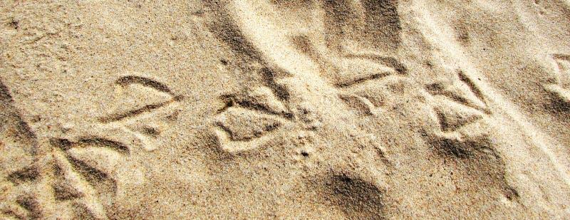 Natürlicher Hintergrund mit Spuren von Möven auf dem Sand stockfotos