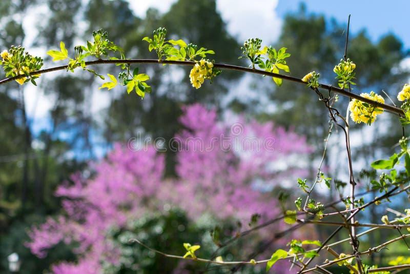 Natürlicher Rahmen von Niederlassungen auf einem Hintergrund von purpurroten Blumen unscharf Schöner natürlicher Hintergrund stockbild