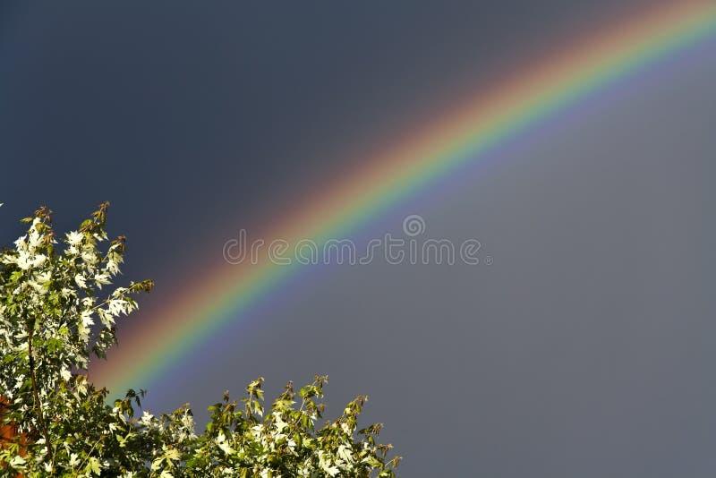 natürlicher Regenbogen stockfotografie