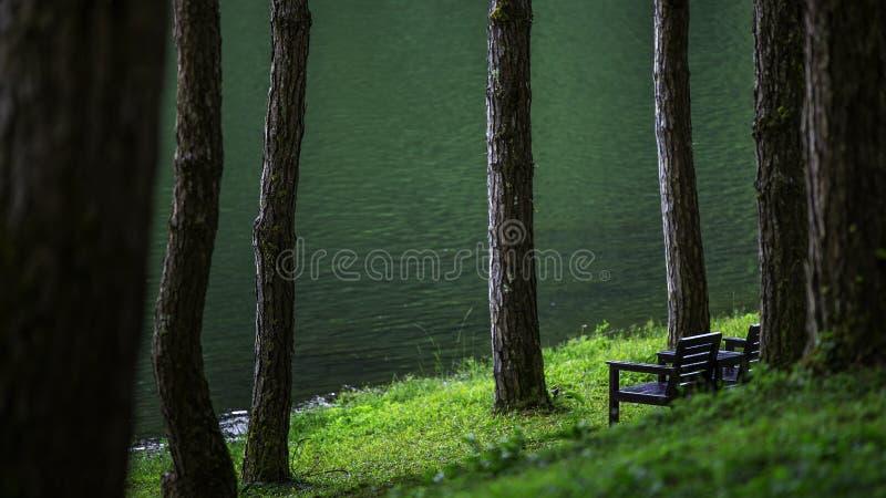 Natürlicher Ruheplatz mit Bäumen und Flüssen lizenzfreies stockbild