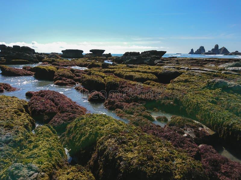 Natürlicher Strand Neuseelands in der südlichen Insel lizenzfreies stockfoto