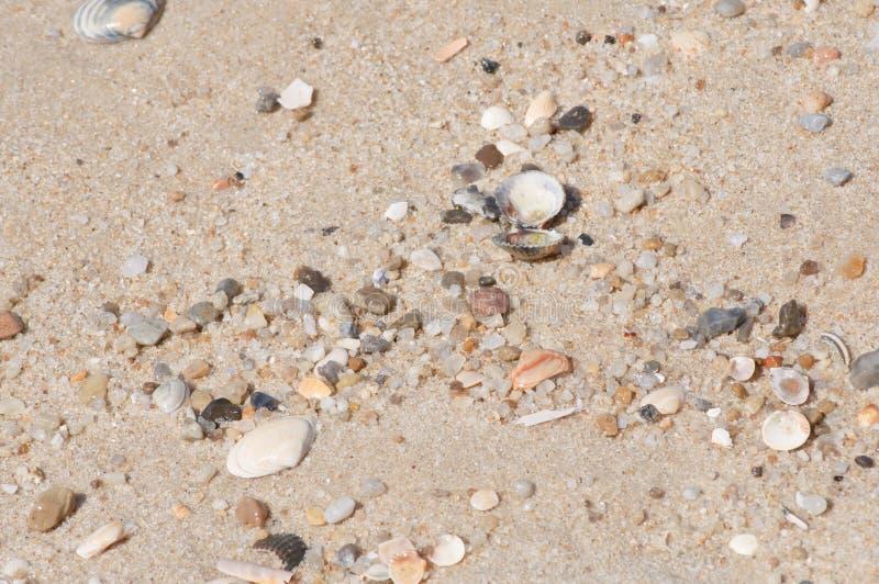 Natürlicher Strandsand mit kleinen angeschwemmten Waren lizenzfreies stockfoto