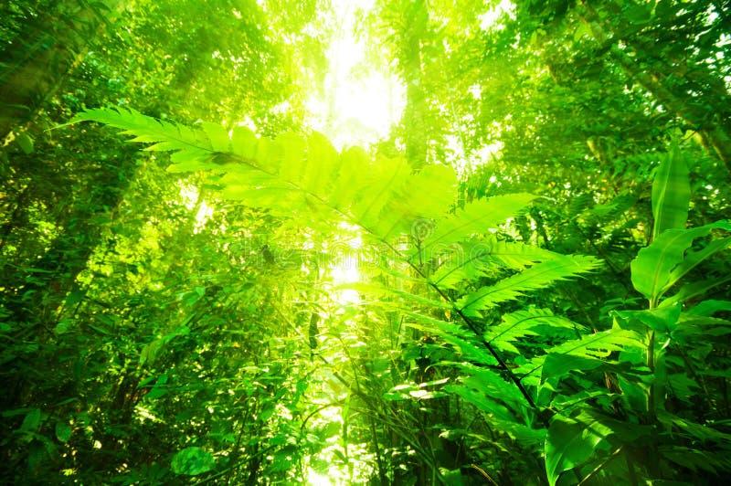 Natürlicher tropischer Regenwald lizenzfreies stockfoto
