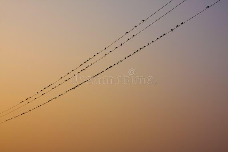 Natürlicher Vogelaufenthalt in der elektrischen Linie stockbilder