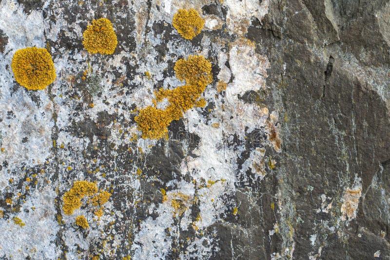 Natürliches backgound Beschaffenheit von slatestone mit Flechtenmuster stockfotografie