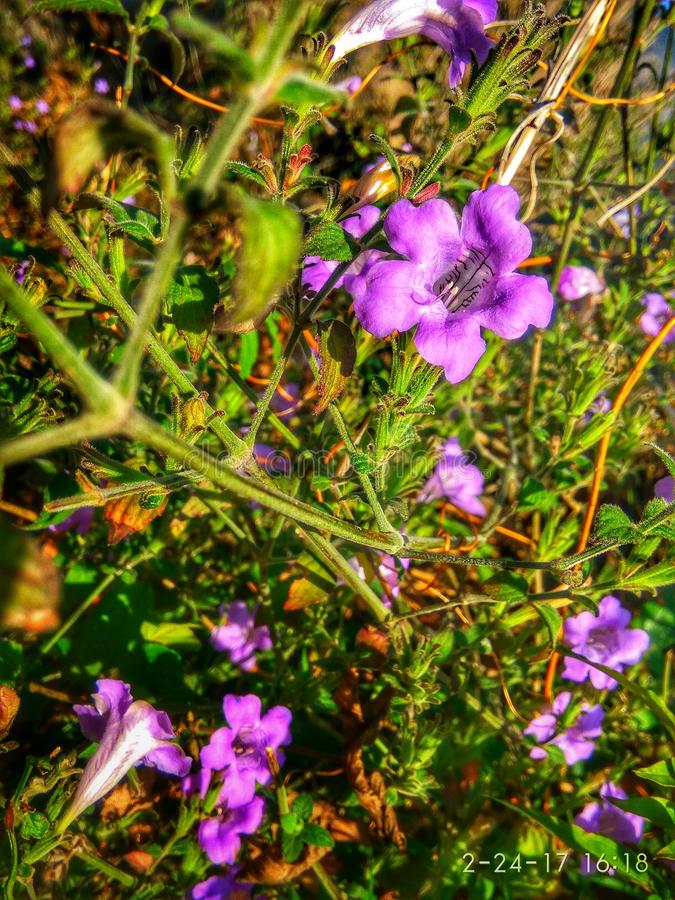 Natürliches Blumen-Bild lizenzfreie stockfotos