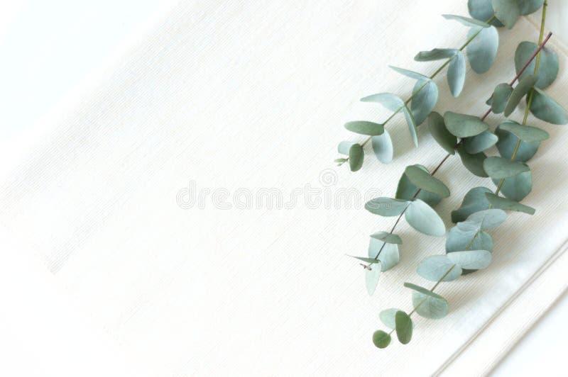 Natürliches eucaluptus elegante Ebenenlage lizenzfreie stockfotografie