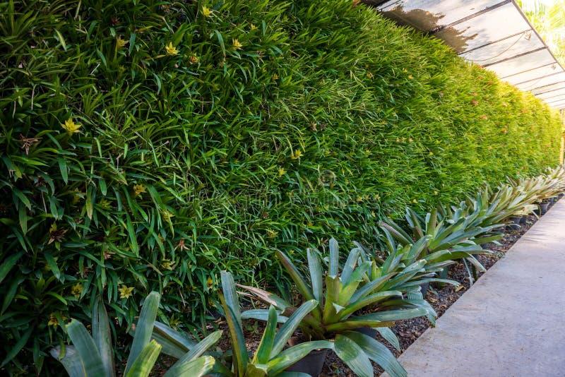 Natürliches grünes Blatt des vertikalen Gartens lizenzfreie stockfotos