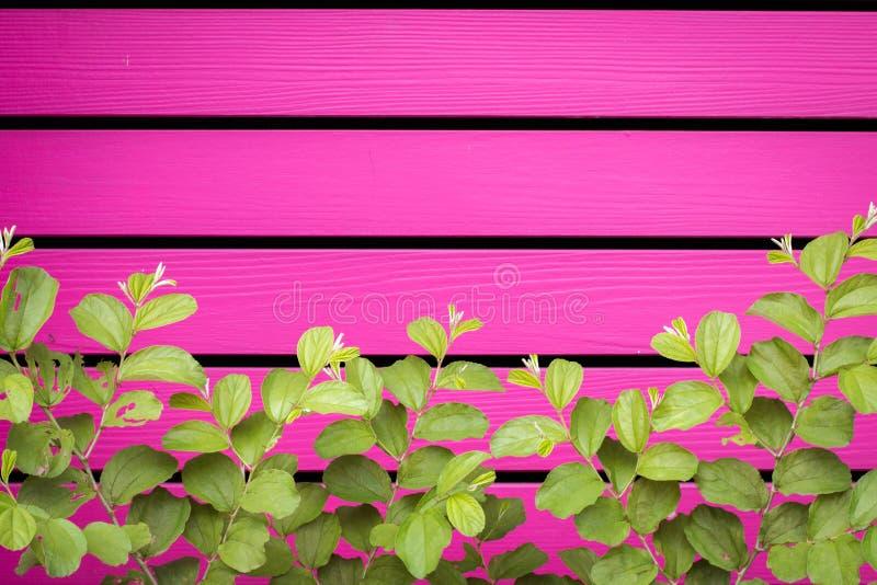 Natürliches grünes Blatt vor horizontalem hölzernem Brett stockbild