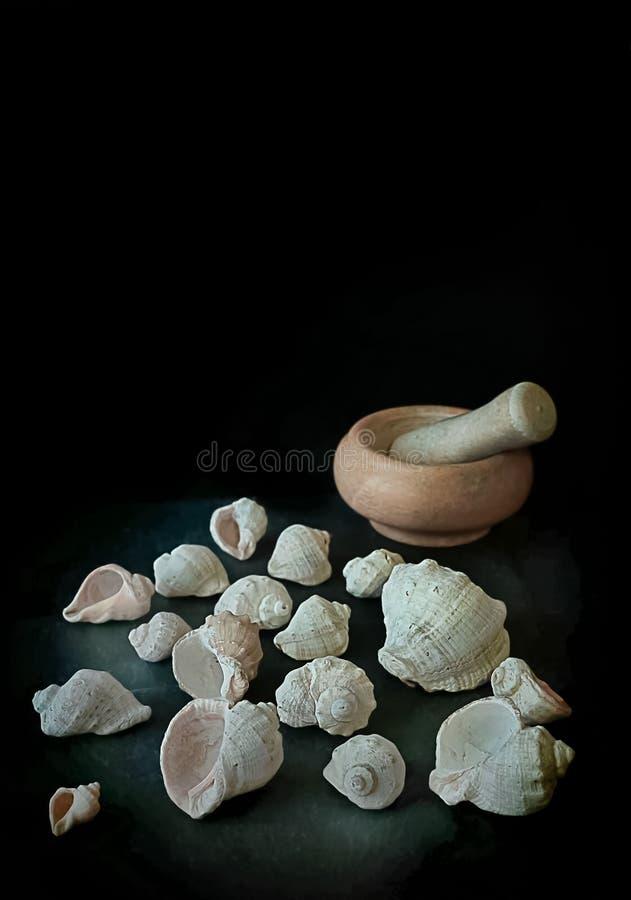 Natürliches Kalzium aus Muscheln von Meerestieren Mehrere Seeschiffe liegen auf einem Steintisch In der Nähe befindet sich ein Mö stockbilder