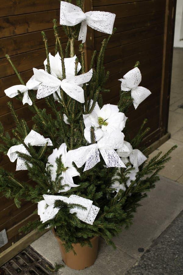 Natürliches weißes Gänseblümchen lizenzfreie stockfotografie