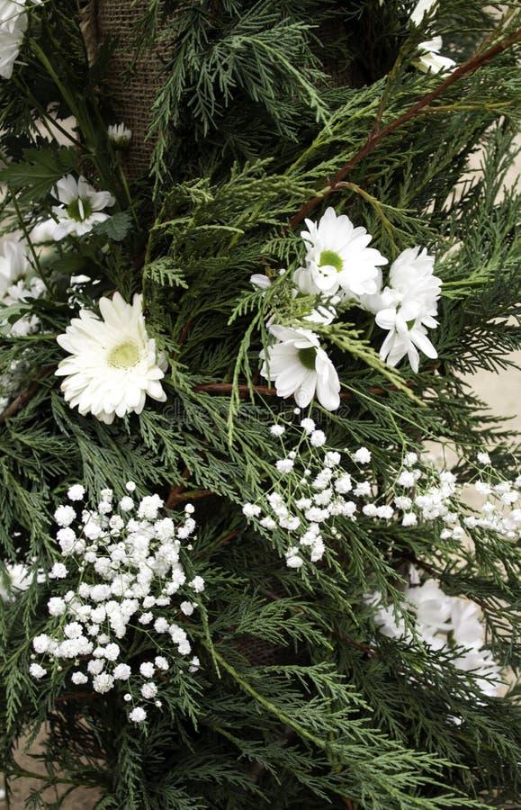 Natürliches weißes Gänseblümchen stockbild