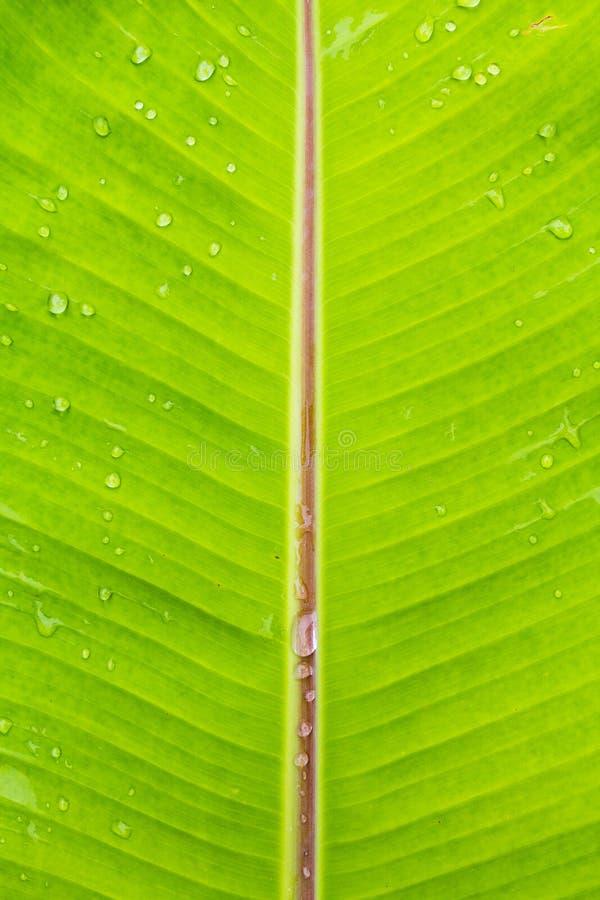 Nat banaanblad na rainny stock foto's