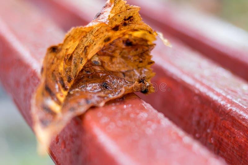 Nat blad van kastanje op een bank in het park tijdens regen in F stock foto