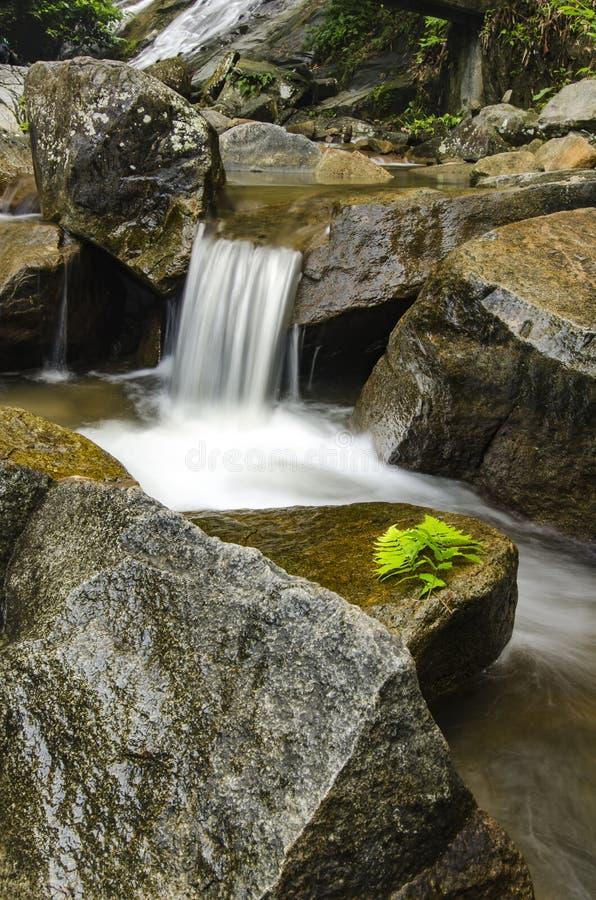 Nat die rots en varenblad door groene tropische bos en rivier wordt omringd stock fotografie