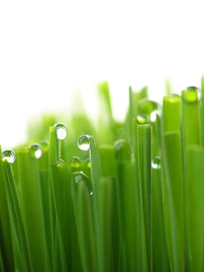 Nat groen gras stock foto
