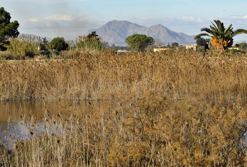 Nat land dichtbij de Segura rivierbanken in Guardamar, Alicante - Spanje royalty-vrije stock foto's