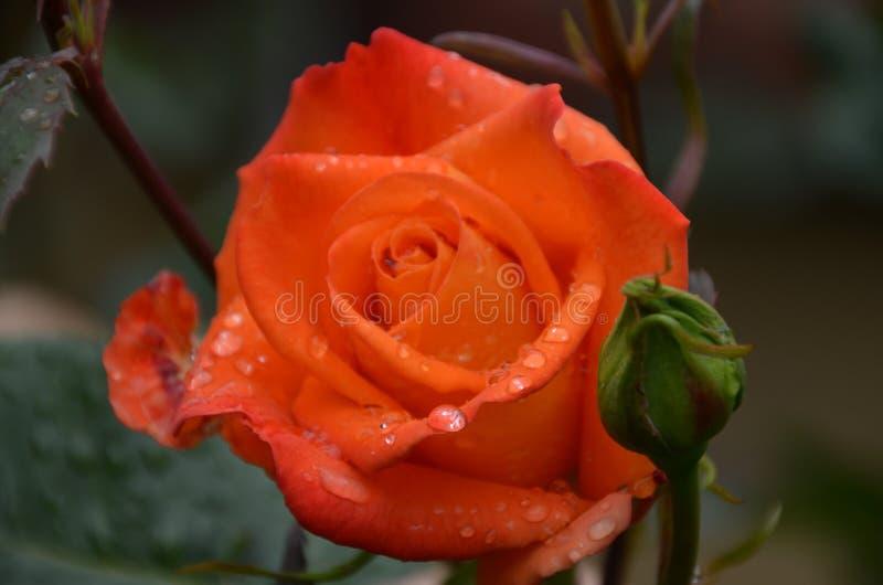 Nat nam in oranje regen toe stock afbeelding
