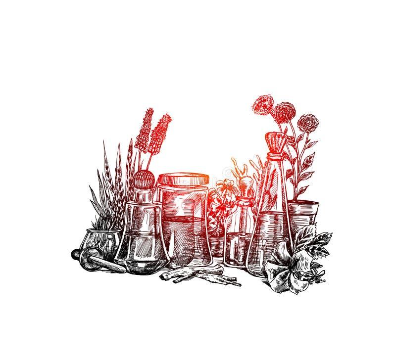 Nat?rliche organische Botanik und wissenschaftliche Glaswaren, alternative Krautmedizin, nat?rliche Hautpflegesch?nheitsprodukte lizenzfreie abbildung