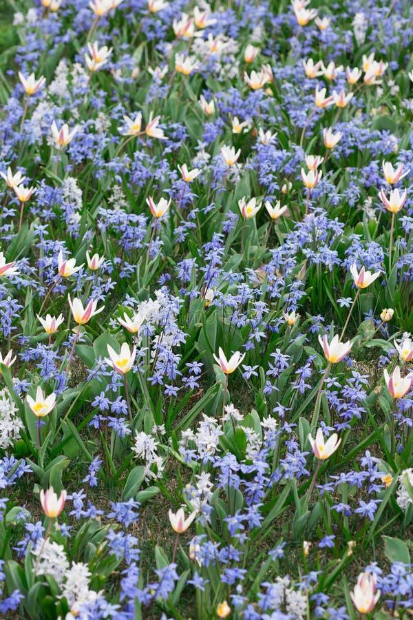 Nat?rlicher Blumenhintergrund mit Weichzeichnung Schöne Sommerwiese mit im Frühjahr blühen, Makro, Natur stockfotografie