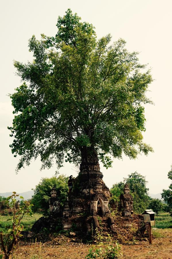 Nat. Spiritual tree in a myanmar Village stock photography