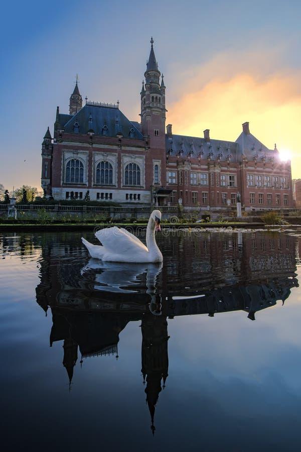 Natação da cisne no por do sol do outono fotografia de stock royalty free