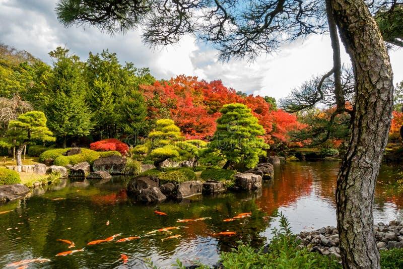Natação de Koi Fish na lagoa do jardim japonês imagem de stock