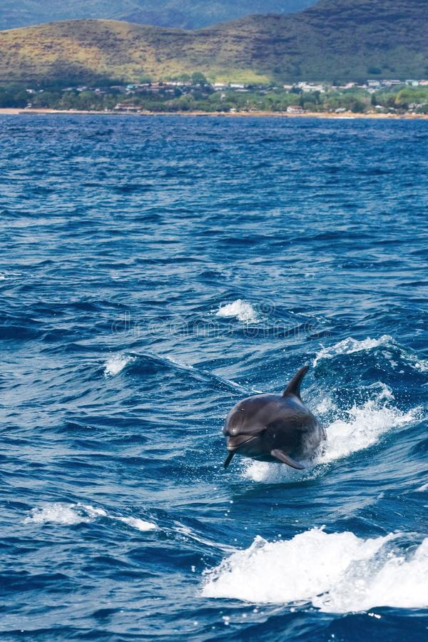 Natação do golfinho com o barco imagens de stock royalty free