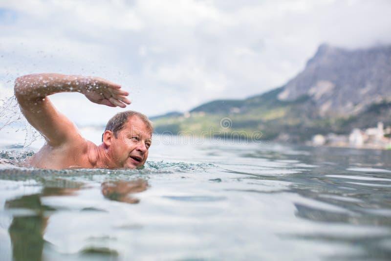 Natação do homem superior no mar/oceano imagem de stock