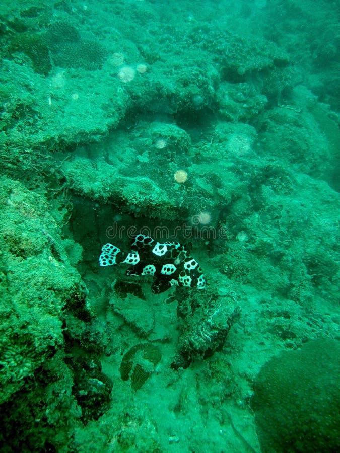 Natação dos peixes no recife coral imagens de stock royalty free