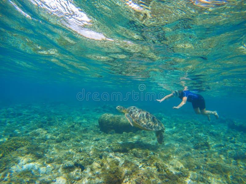 Natación de la mujer con la tortuga de mar Animal de mar exótico Actividad tropical del deporte de las vacaciones de la isla fotografía de archivo