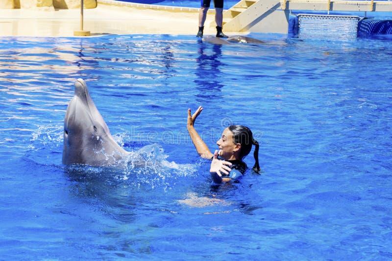 Natación del instructor de la mujer con los delfínes imagen de archivo libre de regalías