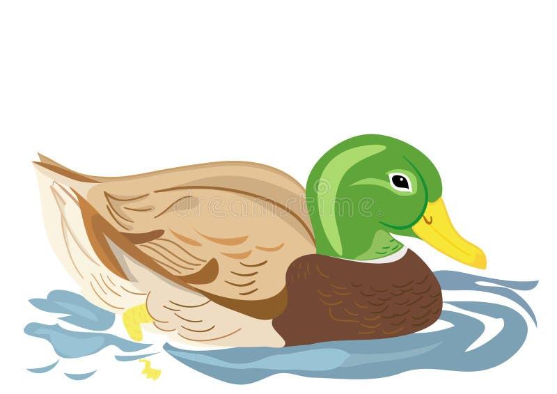 Natación del pato en la charca stock de ilustración