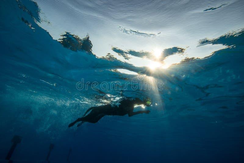 Natación del perro en una piscina fotografía de archivo