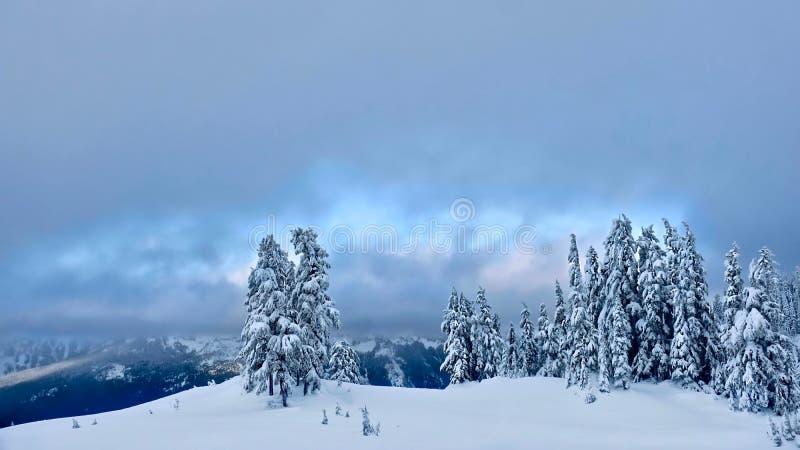 Natal branco Árvores cobertas com a neve imagem de stock