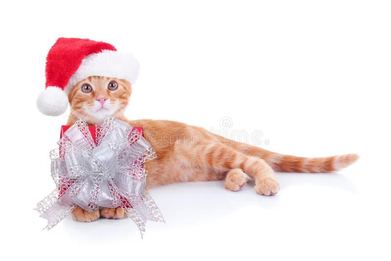 Natal Cat Gift fotografia de stock