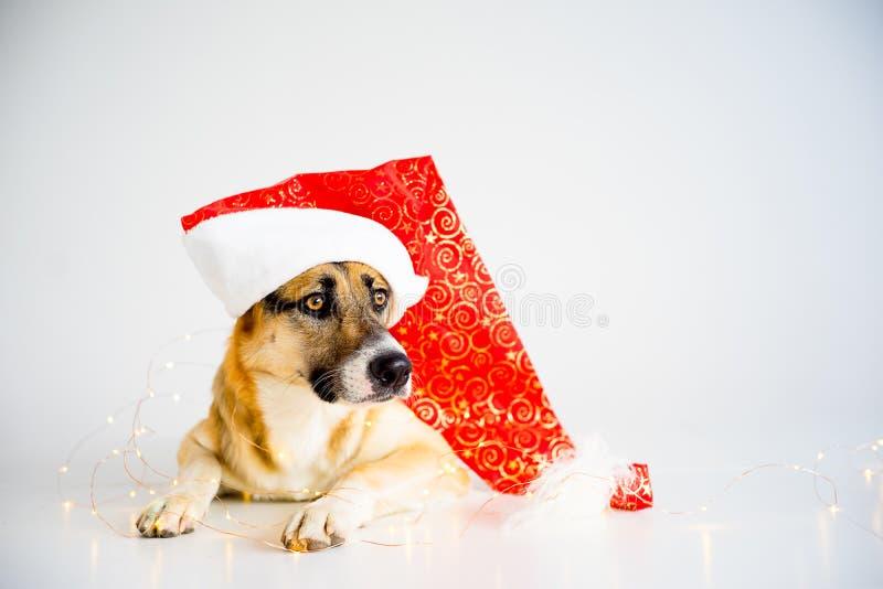 Natal com um cão foto de stock