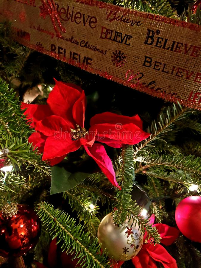 Natal da poinsétia fotografia de stock