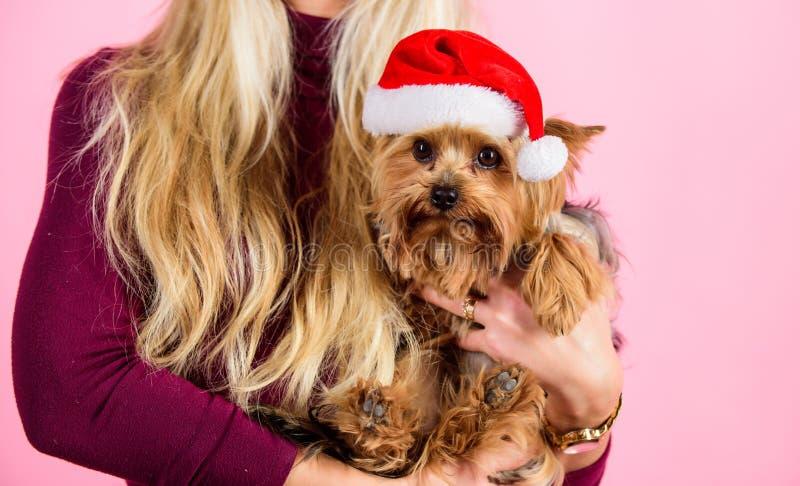 Natal do amor da razão com animais de estimação Maneiras de ter o Feliz Natal com animais de estimação Rosa louro atrativo do ani fotos de stock
