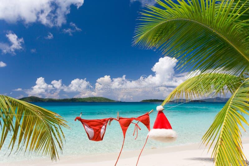 Natal tropico fotografia de stock royalty free